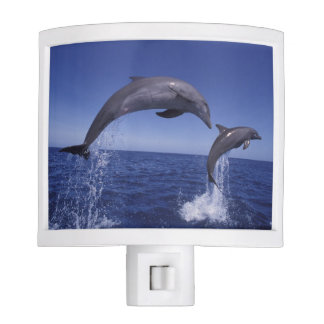 Caribbean, Bottlenose dolphins Tursiops 7 Night Light