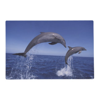 Caribbean, Bottlenose dolphins Tursiops 7 Laminated Place Mat