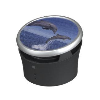 Caribbean, Bottlenose dolphins Tursiops 7 Speaker