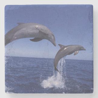 Caribbean, Bottlenose dolphins Tursiops 7 Stone Coaster
