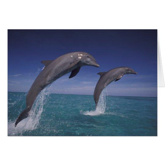 Caribbean, Bottlenose dolphins Tursiops 8 Card