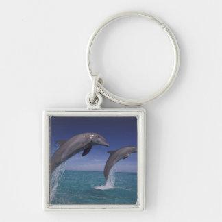 Caribbean, Bottlenose dolphins Tursiops 8 Keychain