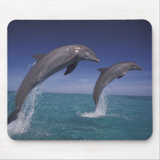 Caribbean, Bottlenose dolphins Tursiops 8 Mouse Pad