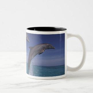 Caribbean, Bottlenose dolphins Tursiops 8 Two-Tone Coffee Mug