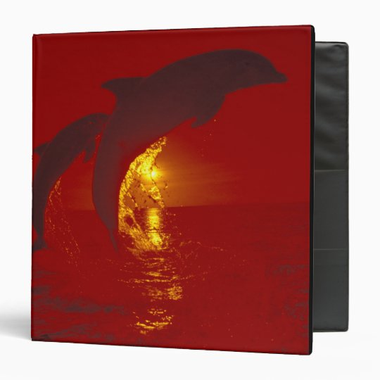 Caribbean, Bottlenose dolphins Tursiops 9 3 Ring Binder
