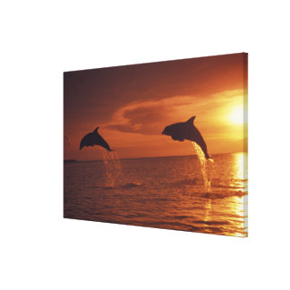 Caribbean, Bottlenose dolphins Tursiops 9 Canvas Print