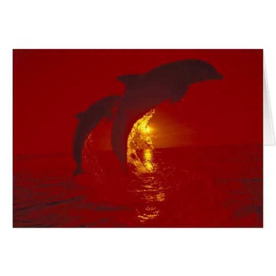 Caribbean, Bottlenose dolphins Tursiops 9 Card