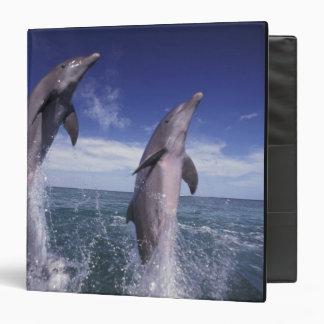 Caribbean, Bottlenose dolphins Tursiops Binders