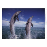 Caribbean, Bottlenose dolphins Tursiops Card