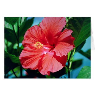 Caribbean flower card