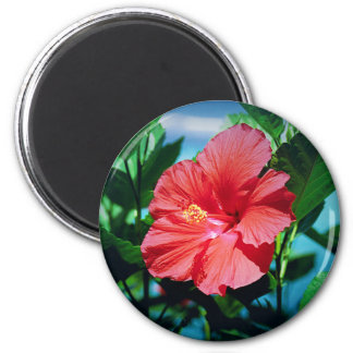 Caribbean flower fridge magnets