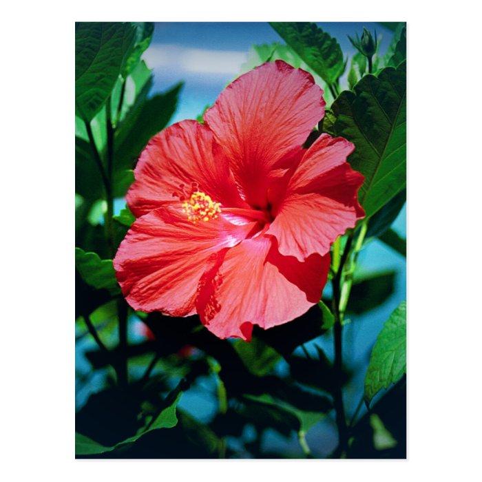 Caribbean flower postcard