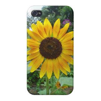 Caribbean Golden Sun Flower Cover For iPhone 4