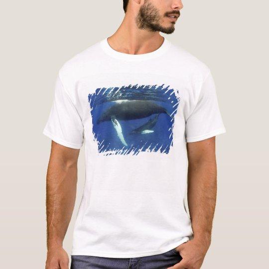 Caribbean, Greater Antilles archipelago, T-Shirt