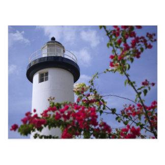Caribbean, Puerto Rico, Viegues Island. The Postcard
