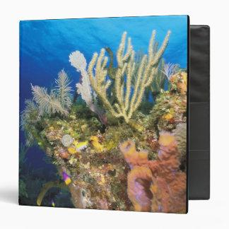 Caribbean. Reef. Binder