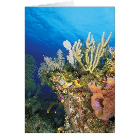 Caribbean. Reef. Card
