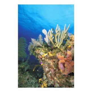 Caribbean. Reef. Photo Print