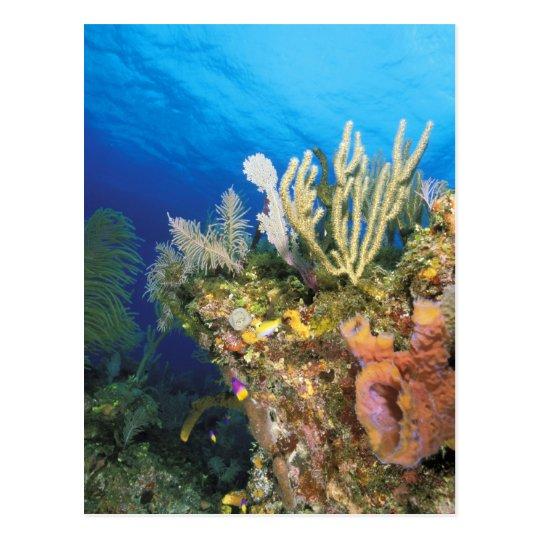 Caribbean. Reef. Postcard