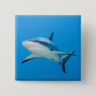 Caribbean reef shark (Carcharhinus perezi) Button
