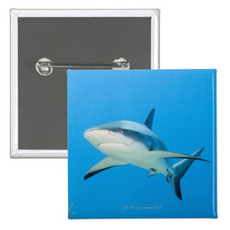 Caribbean reef shark (Carcharhinus perezi) Buttons
