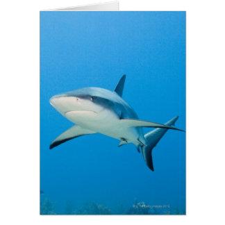 Caribbean reef shark (Carcharhinus perezi) Card