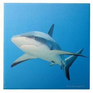 Caribbean reef shark (Carcharhinus perezi) Ceramic Tile