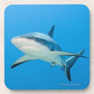 Caribbean reef shark Carcharhinus perezi Drink Coasters