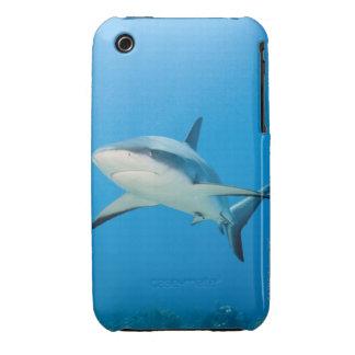 Caribbean reef shark (Carcharhinus perezi) iPhone 3 Cases