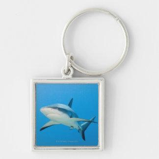Caribbean reef shark (Carcharhinus perezi) Keychain