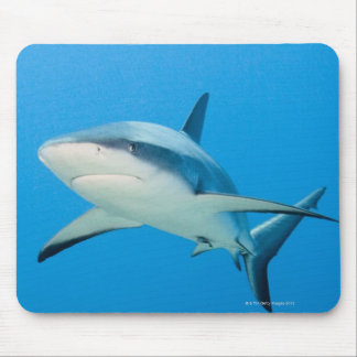 Caribbean reef shark (Carcharhinus perezi) Mousepads