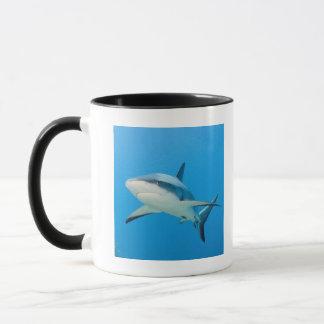 Caribbean reef shark (Carcharhinus perezi) Mug