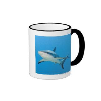 Caribbean reef shark Carcharhinus perezi Mugs