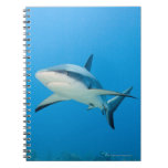 Caribbean reef shark (Carcharhinus perezi) Spiral Note Books