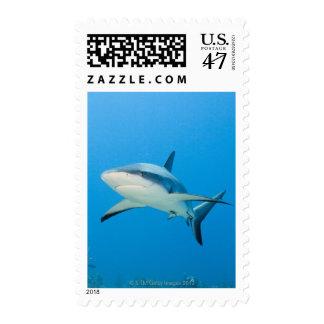 Caribbean reef shark (Carcharhinus perezi) Postage