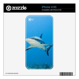 Caribbean reef shark (Carcharhinus perezi) Decal For The iPhone 4