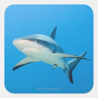 Caribbean reef shark (Carcharhinus perezi) Square Stickers