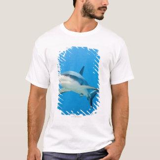 Caribbean reef shark (Carcharhinus perezi) T-Shirt