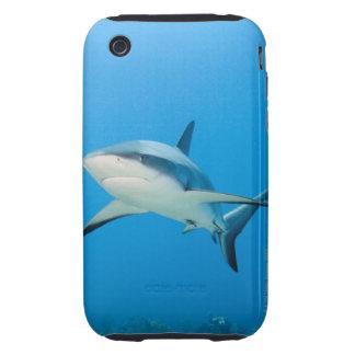 Caribbean reef shark (Carcharhinus perezi) Tough iPhone 3 Covers