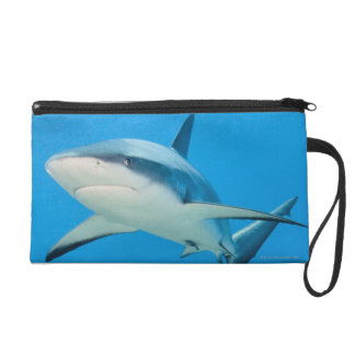 Caribbean reef shark (Carcharhinus perezi) Wristlet Purse