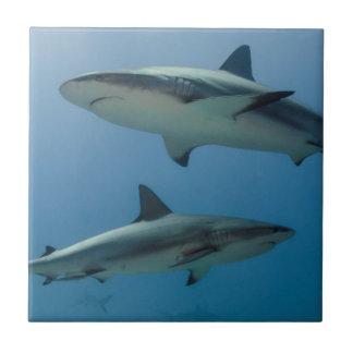 Caribbean Reef Shark Ceramic Tile