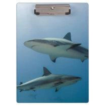 Caribbean Reef Shark Clipboard