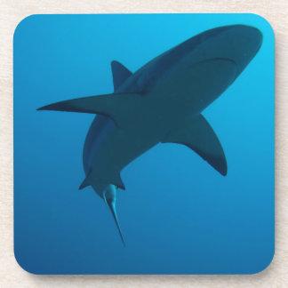 Caribbean Reef Shark Beverage Coasters