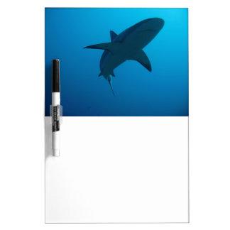 Caribbean Reef Shark Dry-Erase Board
