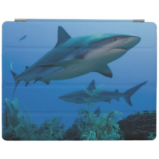 Caribbean Reef Shark Jardines de la Reina iPad Cover
