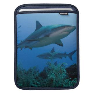 Caribbean Reef Shark Jardines de la Reina iPad Sleeves