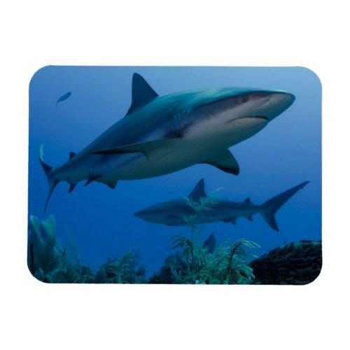 Caribbean Reef Shark Jardines de la Reina Magnet