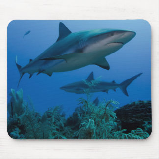 Caribbean Reef Shark Jardines de la Reina Mouse Pad