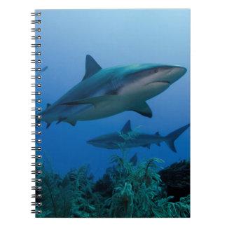 Caribbean Reef Shark Jardines de la Reina Note Books