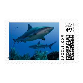 Caribbean Reef Shark Jardines de la Reina Postage Stamp